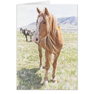 Tarjeta de felicitación del mustango del caballo