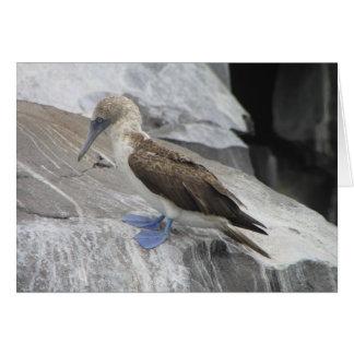 Tarjeta de felicitación del pájaro