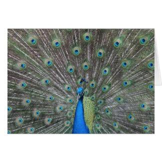 Tarjeta de felicitación del pavo real