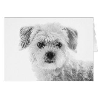 Tarjeta de felicitación del perro maltés