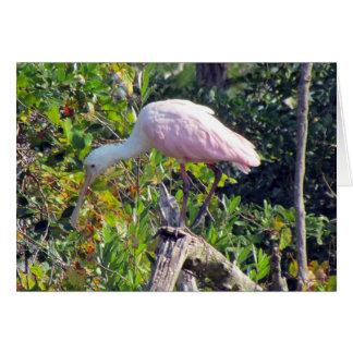Tarjeta de felicitación del Spoonbill rosado