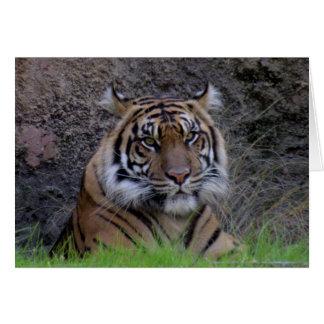 Tarjeta de felicitación del tigre de Bengala