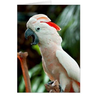 Tarjeta de felicitación feliz del cockatoo