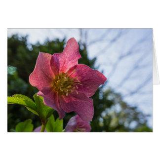 Tarjeta de felicitación horizontal de la flor roja