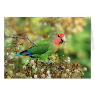 Tarjeta de felicitación - Lovebird Atractivo-hecho