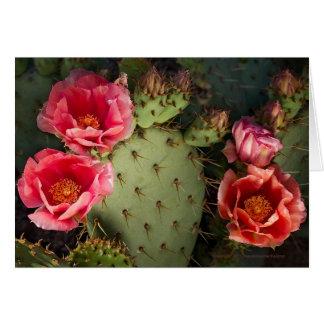 Tarjeta de felicitación personalizada cactus