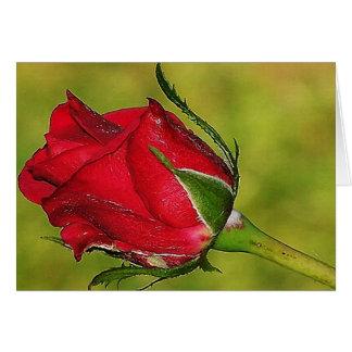 Tarjeta de felicitación roja del capullo de rosa