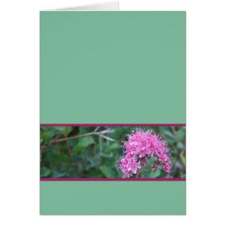 Tarjeta de felicitación rosada del Wildflower