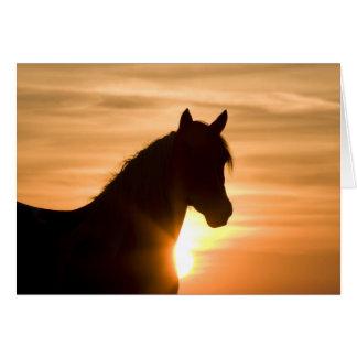 Tarjeta de felicitación salvaje del caballo