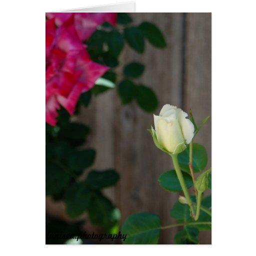 Tarjeta de felicitación vertical:  Capullo de rosa
