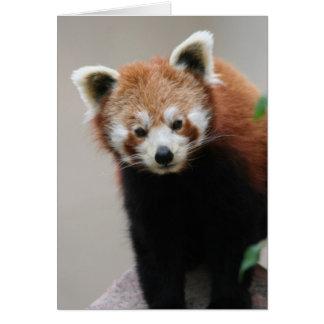 Tarjeta de felicitaciones adaptable de la panda