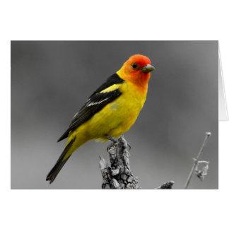 Tarjeta de felicitaciones americana del pájaro