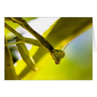 Tarjeta de felicitaciones de la mantis religiosa