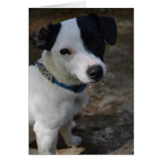 Tarjeta de Jack Russell Terrier