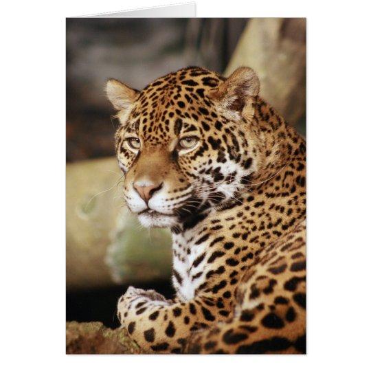 Tarjeta de Jaguar