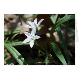 Tarjeta de la belleza de primavera (virginica del