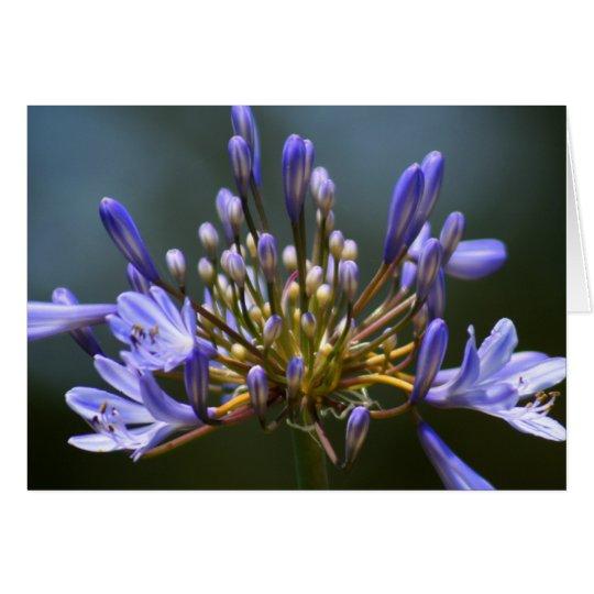 Tarjeta de la flor de Agapantha