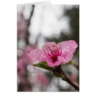 Tarjeta de la flor de cerezo de la montaña