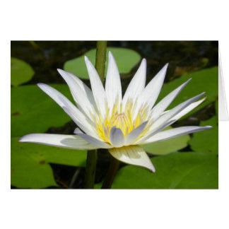 Tarjeta de la flor de Lotus blanco
