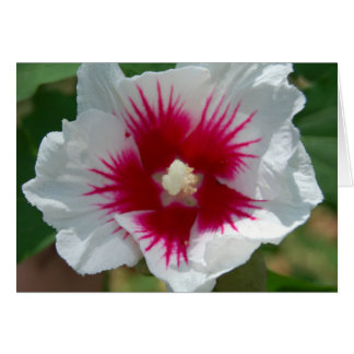 Tarjeta de la flor de Starburst