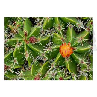 Tarjeta de la flor del cactus - saludo del