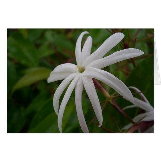 Tarjeta de la flor del jazmín