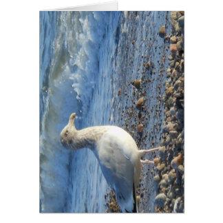 Tarjeta de la foto de la gaviota