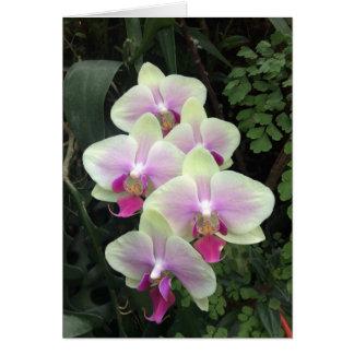 Tarjeta de la foto de la orquídea de Singapur