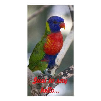 Tarjeta de la foto de Lorikeet del arco iris Tarjeta Fotografica