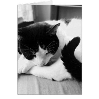 Tarjeta de la foto del gato el dormir