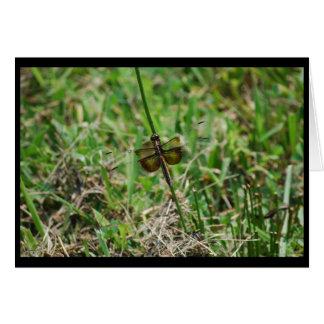 Tarjeta de la libélula de la desnatadora de la viu
