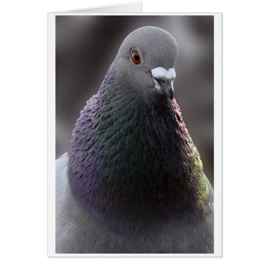 Tarjeta de la paloma de Glasgow