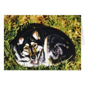 """Tarjeta de la roca del perro de """"Sasha"""""""