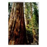 Tarjeta de las secoyas de Yosemite
