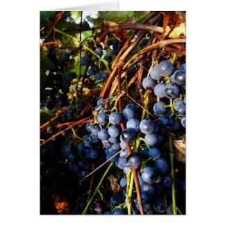 Tarjeta de las vides de uva de concordia