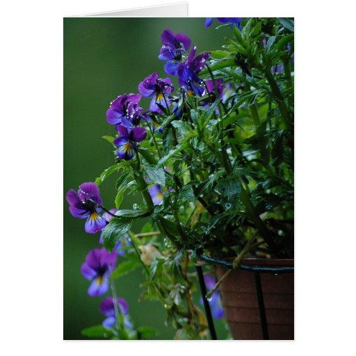Tarjeta de las violetas