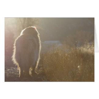 Tarjeta de Leonberger Symapthy
