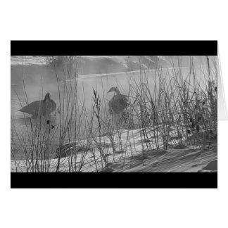 Tarjeta de los cisnes del invierno del ~ de