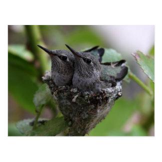 Tarjeta de los colibríes