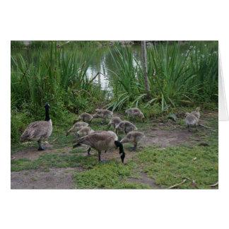 Tarjeta de los gansos y de los ansarones