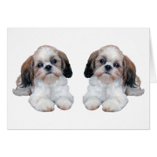 Tarjeta de los perritos de Shih Tzu