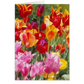 Tarjeta de los tulipanes