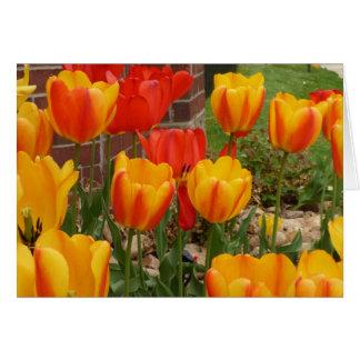 Tarjeta de los tulipanes de la primavera