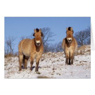 Tarjeta de Navidad - caballo 2 de Przewalski