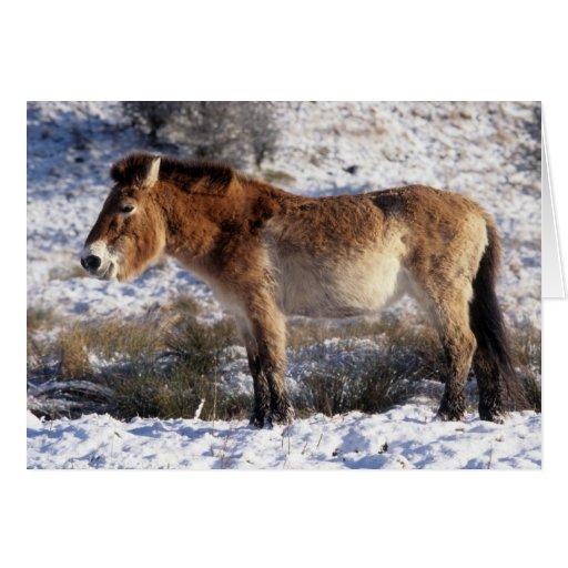 Tarjeta de Navidad - caballo 6 de Przewalski
