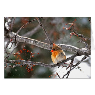 Tarjeta de Navidad - cardenal con los copos de