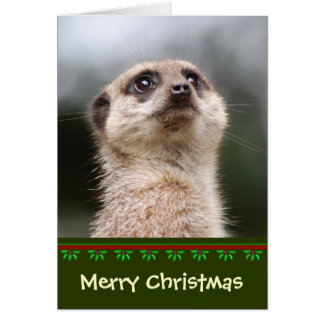 Tarjeta de Navidad de Meerkat