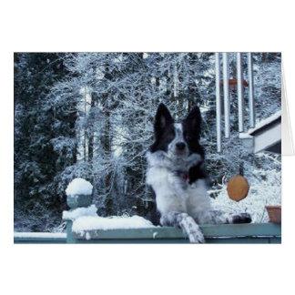 Tarjeta de Navidad del border collie