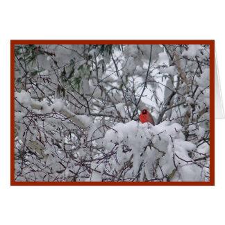 Tarjeta de Navidad del cardenal 6211-2 de la nieve