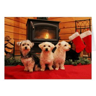 Tarjeta de Navidad del perrito del hogar